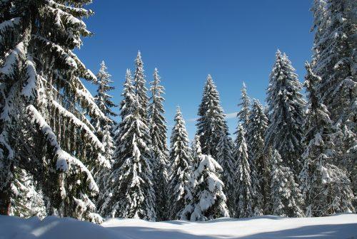 Station de ski de Pamporovo